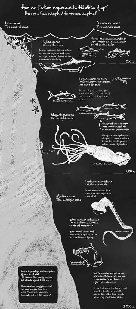Havsdjup, illustration