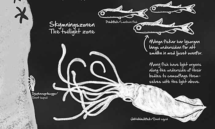 Illustration för utställning, Sjöfartsmuseet
